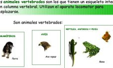 ¿Qué significa que un animal sea vertebrado?