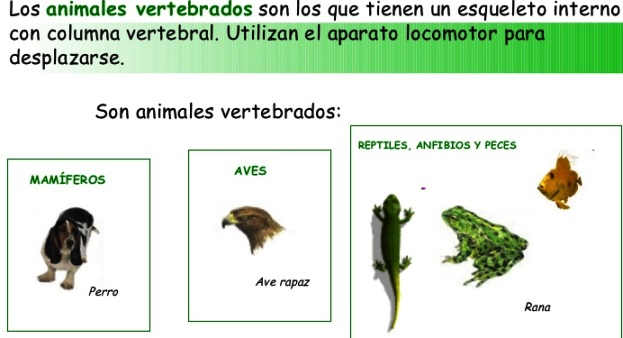 ¿Qué significa que un animal sea vertebrado?