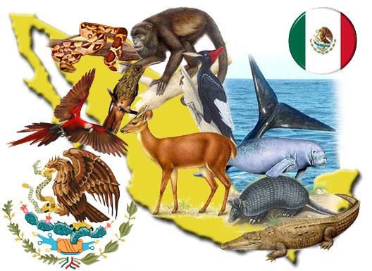 ¿Cuáles son los animales vertebrados de México?