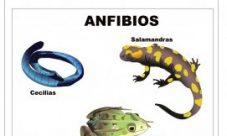 Animales vertebrados de sangre fría