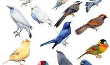 ¿Cuáles son los animales vertebrados que vuelan?