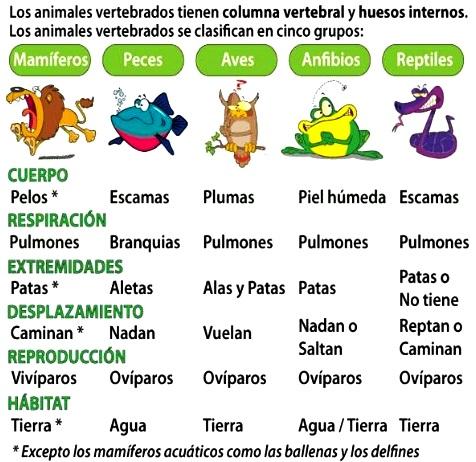 ¿Cuáles son las características de los vertebrados?