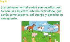 ¿Cuáles son los animales vertebrados?