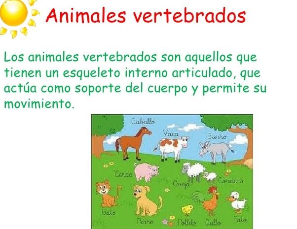 Definición de animales vertebrados