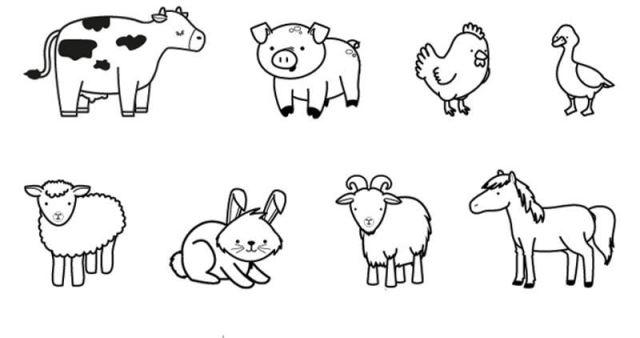 Dibujos de animales vertebrados para colorear