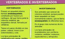 Diferencias entre los animales vertebrados e invertebrados