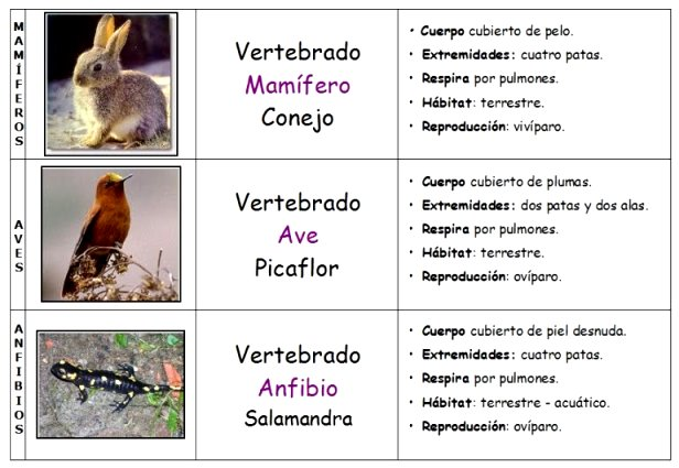 ¿Dónde viven los animales vertebrados?