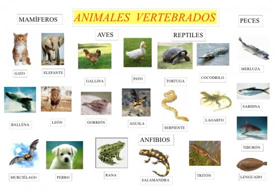 Imágenes de animales vertebrados