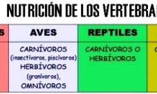 ¿Cómo es la nutrición en los animales vertebrados?