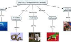 Formas de reproducción de los animales vertebrados